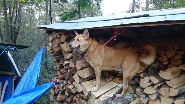 fire-wood-10-16-2016-2