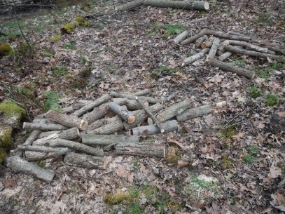 firewood-2-21-2017-1