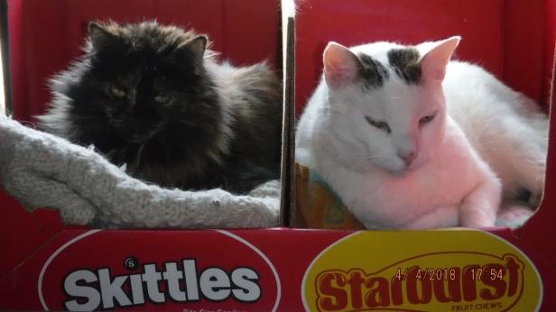 Cat Candy