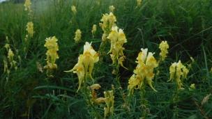 flowers (13)