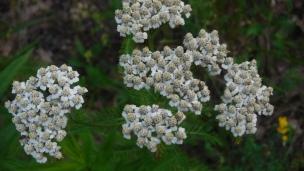 flowers (30)