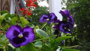 flowers (36)
