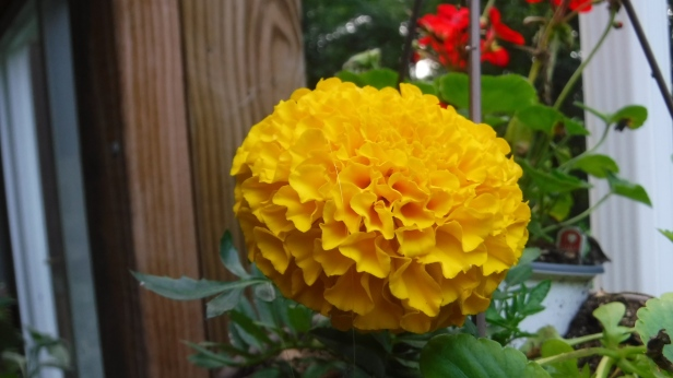 flowers (37)
