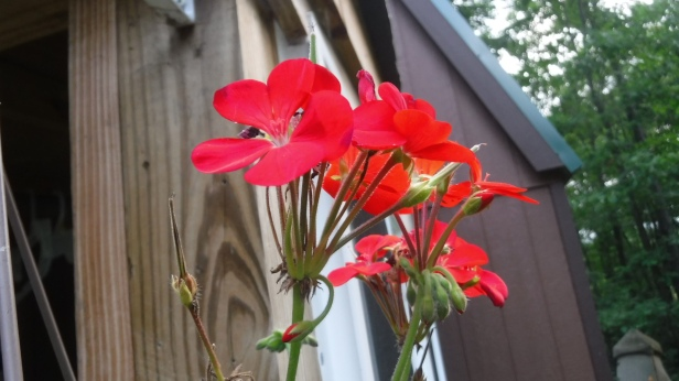 flowers (38)