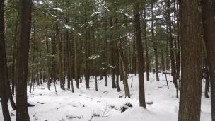 snow hike (12)