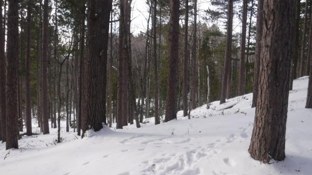 snow hike (14)