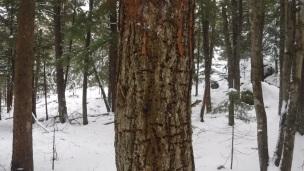 snow hike (8)