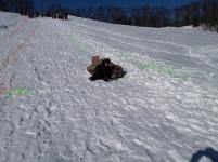 sled race (9)